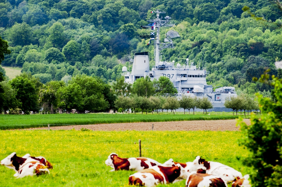 Navy Les vaches regardent passer la Jeanne d'Arc