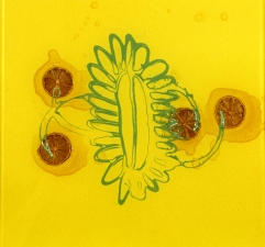 Alexander Viscio Works on glass. 1996-2010 Lemons and enamel paint on glass.