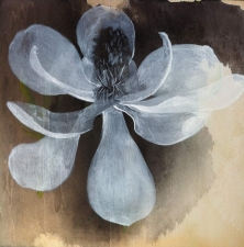 Amie Oliver Botanicals acrylic, charcoal and ink on birch panel
