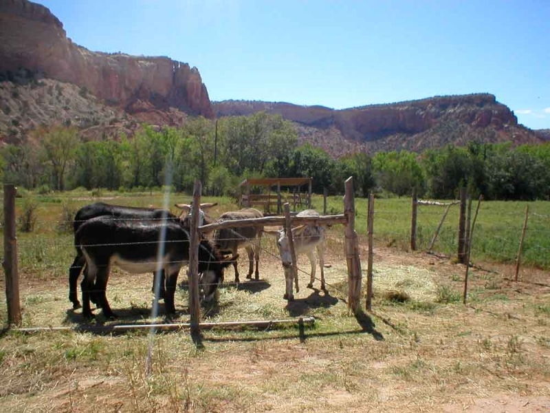 Photography Donkeys at Ghost Ranch, NM