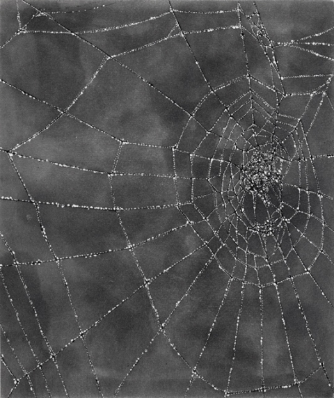 Anita S. Hunt   Webs etching and spit bite aquatint