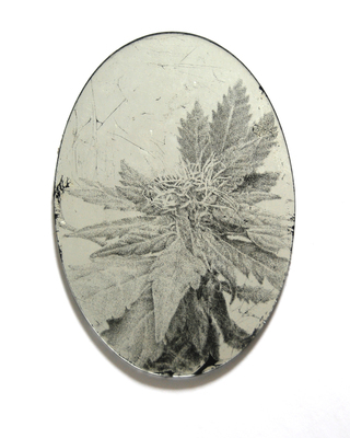 Anne Peabody Drawings Glass, sterling silver leaf, paint