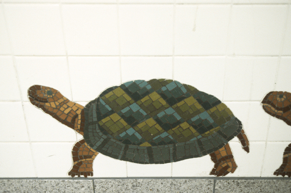 5th Avenue R,N,Q subway station, NYC Urban Oasis- Turtles (5th Avenue, R,N,Q subway station, NYC)