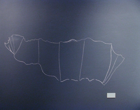 "ANN STODDARD 2011 ""Collecting Installation"" pastel on latex painted wall"