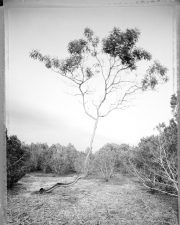 Bill Kennedy Gallery: Little Barton Creek Archival inkjet print on BFK Rives paper.