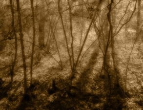 Bill Kennedy Gallery: Woodlands Archival inkjet print on BFK Rives paper.
