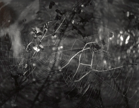 Brian Miller Early Work Gelatin Silver Print
