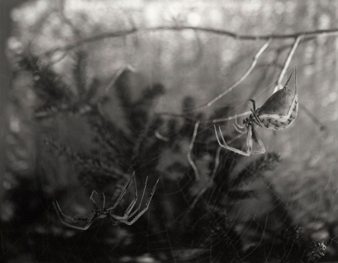 Brian Miller Early Work Platinum Palladium Print