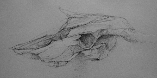 Bob Langnas Some Observational Work graphite