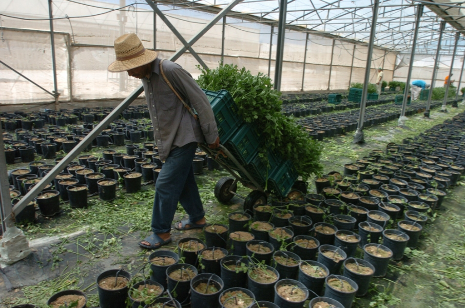 Gaza Strip and Israel Katif Settlement Greenhouse