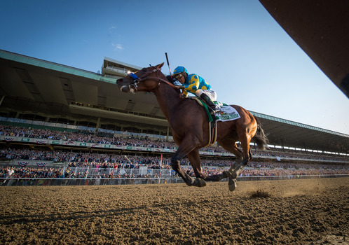 American Pharoah wins the 2015 Belmont Stakes and Triple Crown