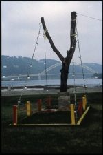 Carlos D. Szembek Works Maple tree section, bungee cord, metal, concrete