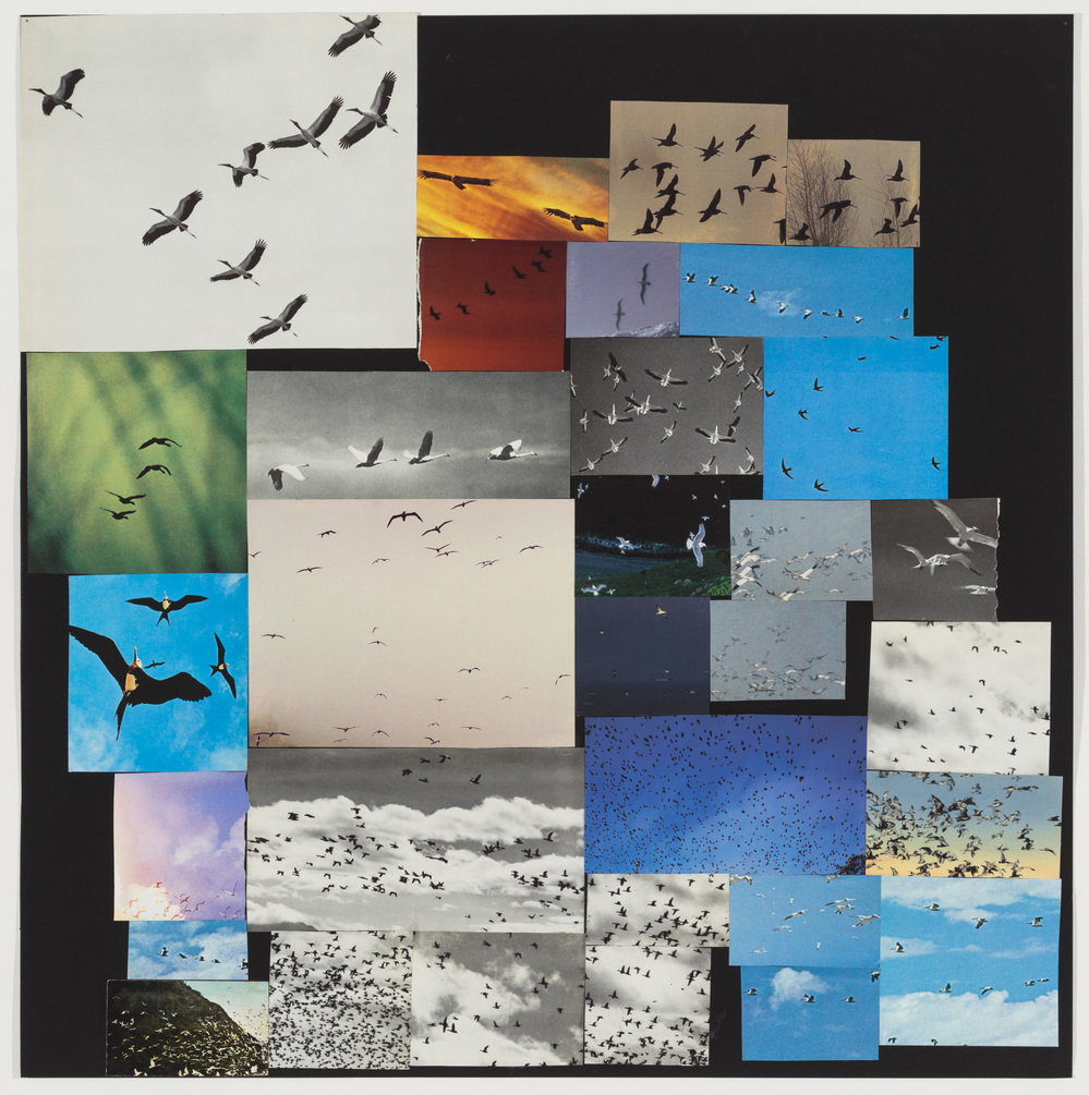 Collage Birds in flight