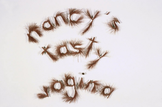 CHARLEY FRIEDMAN NANCY'S TASTY VAGINA pine needles, pinS989