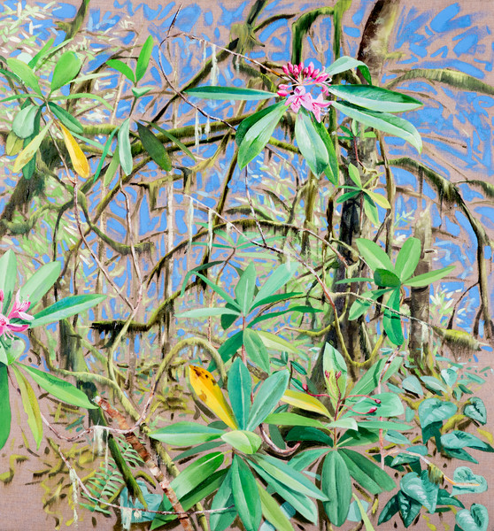 2019 Rhododendron Reaching