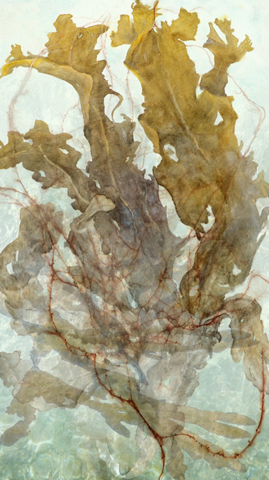 "Mixed Media Paintings 2011-2006 Ascending Rockweed, 2007, Watercolor & Archival Ink Jet Print on Paper, 38.5"" x 22"""
