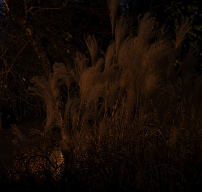 "Night Photographs New Hampshire Grasses, 2015, Archival Pigment Print, 14.5"" x 13.75"""