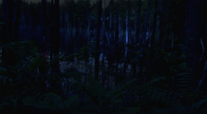 "Night Photographs Night Bog, 2015, Archival Pigment Print, 29"" x 16"""