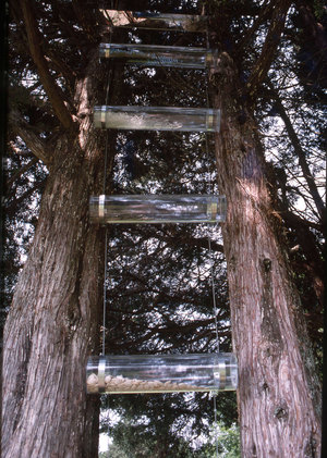 Marcia Cooper BETWEEN the Trees Mixed media with plastic tubes, seeds, glass, mirror