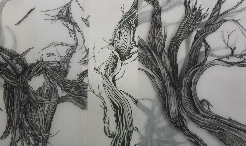 Cristina de Gennaro Sage Drawings Charcoal on mylar.