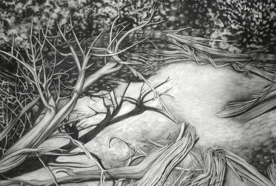 Cristina de Gennaro Sage Drawings Charcoal on mylar