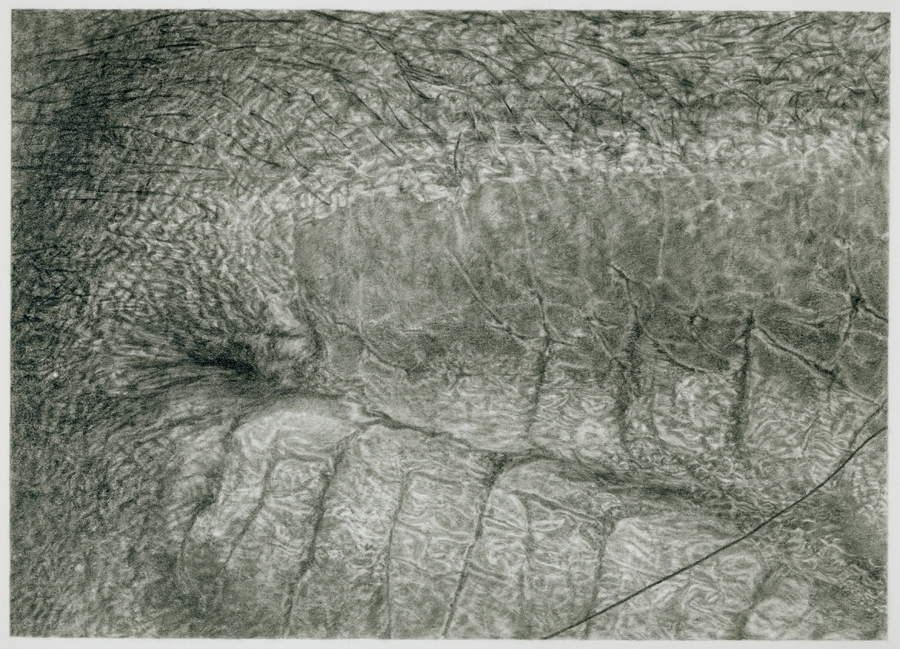 Cynthia Lin Small Drawings of Skin graphite on paper