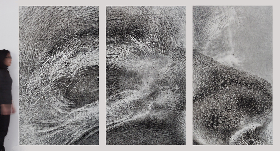 Cynthia Lin Monumental Drawings of Skin Graphite, charcoal, acrylic, and ink on paper