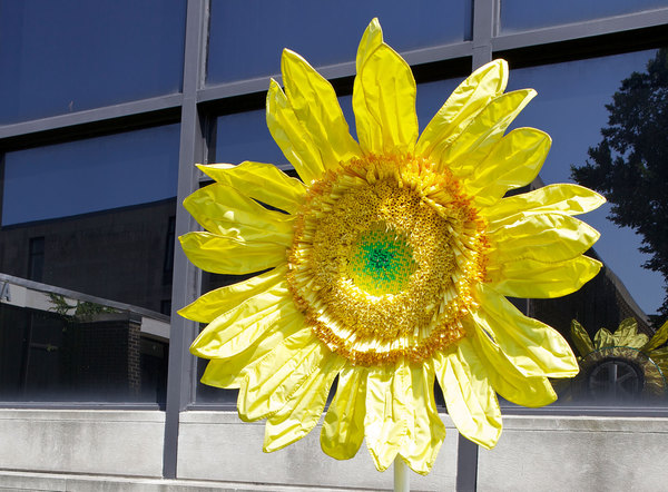 Daina Shobrys Sunflowers Plastic banner fabric, beads, tablecloths, lanyard lacing, screening, garden cart wheel, hardware cloth, galvanized wire.