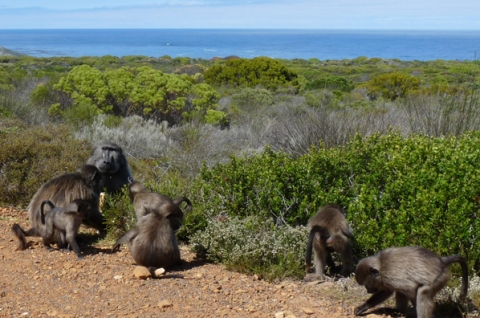 Picnic at Cape Point (The Feasting VI)