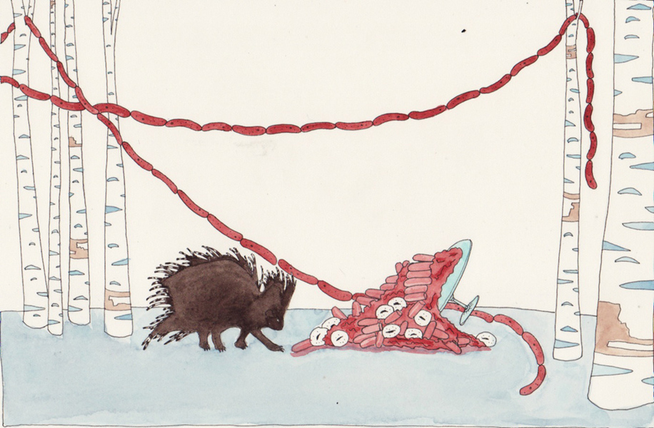 Watercolors Porcupine with Cake and Sausage