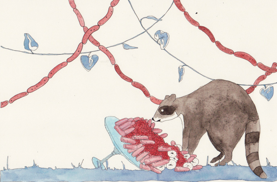 Watercolors Racoon with Cake and Sausage
