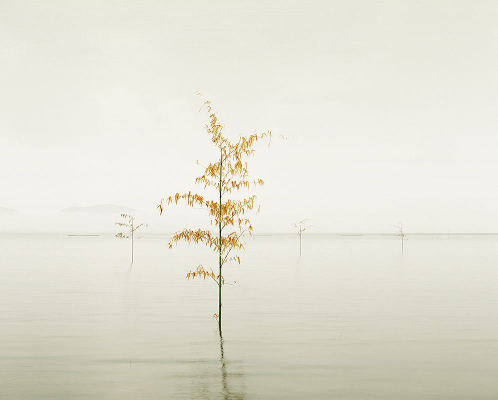 ASIA Orange Leaves, Ariake Sea, Japan, 2010