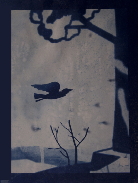 Cyanotypes Drifting