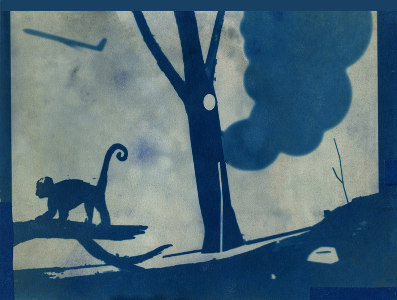 Cyanotypes In the Wild