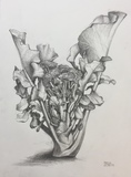 DeAnn L Prosia Drawings Graphite
