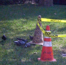 Deborah Pohl Site specific installations/performance Traffic cone and birdseed