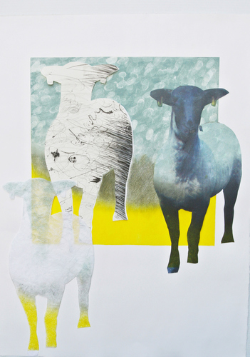 Debra Radke Sheep  Drypoint technique, monotype and digital print collaged on  Somerset