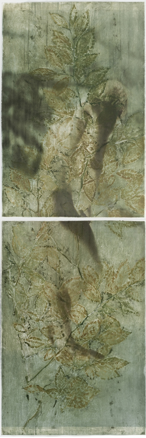 Creatura Botanica: Human and Plant Forms Conjoined collagraph on cotton ultrachrome photo print mounted on stretched canvas