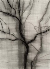 Eileen Gillespie Works on Paper charcoal on paper