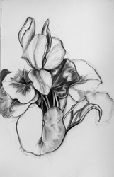 Eileen Mislove Flowers - Charcoal Drawings Charcoal on Paper