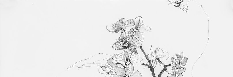 Sketchbook Orchids 1