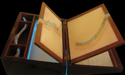 Elizabeth Pols Zero at the Bone mixed media: oils on panel, Victorian writing desk,  etched mirror, electroluminescent wire, snake skin