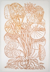 Ellen Kahn Botanical Works on Paper ink on paper