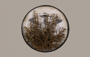 ERIC SHULTIS  Photo photo, dried flowers, glass dome