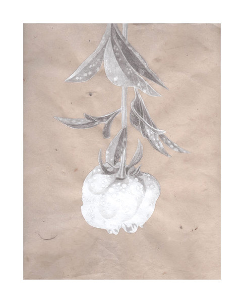 5th Business Meg Alexander: Field to Flower India ink, graphite, acrylic gesso and aqua ground on Nepal paper