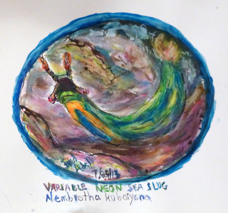 Fred Adell - Wildlife Artist Mollusks mixed media (ink, watercolor, oil pastel)