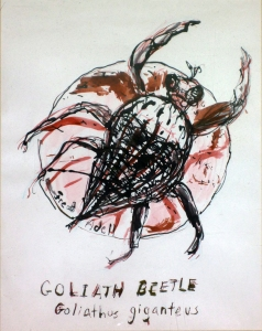 Fred Adell - Wildlife Artist Insects mixed media (sepia and India ink) on paper