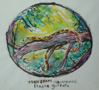 Fred Adell - Wildlife Artist Snakes mixed media (ink, watercolor, oil pastel)