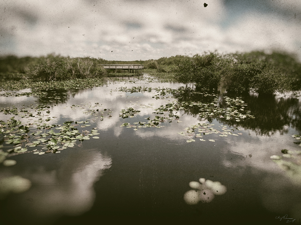 Digital Files of Artists Chip Perone, Swamp, 12 x 16, digital photo, 2015