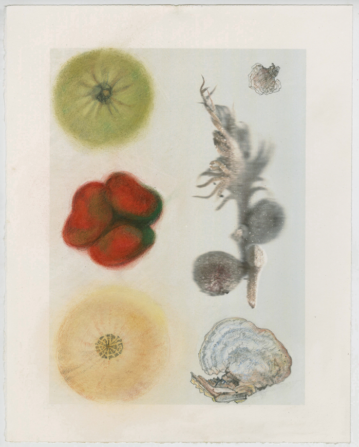 work on paper 2011-2013 Sago Palm, Quince, Pepper, Squash, Funghi